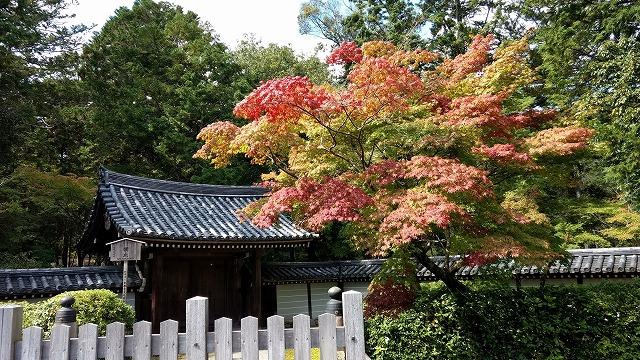 2017.10.9 京都 かなえちゃんと_22.jpg
